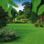 Fertilise for a healthy green lawn